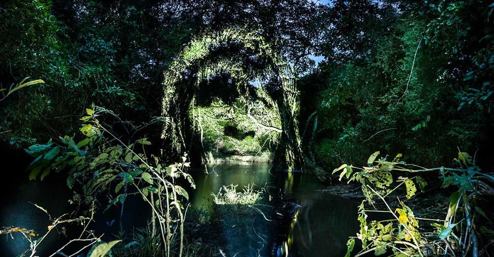 фото городские леса